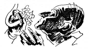 Иллюстрация 21